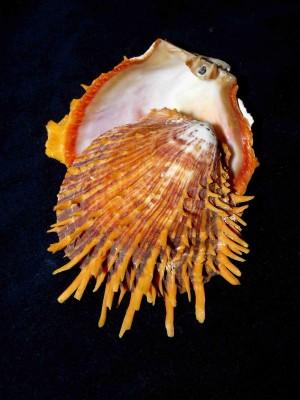 Marvellous Molluscs – Part 2