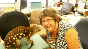 Incredible Insects: From the desk of Quentin the Quoll