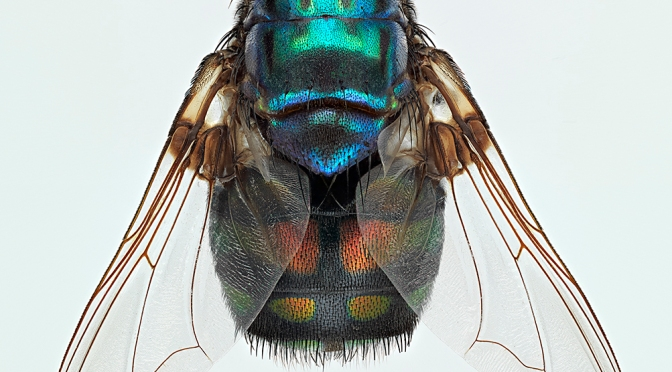 Award-winning images of specimens from the collection
