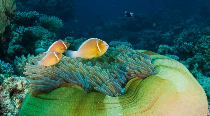 Understanding the diversity of the Great Barrier Reef – and why it's important