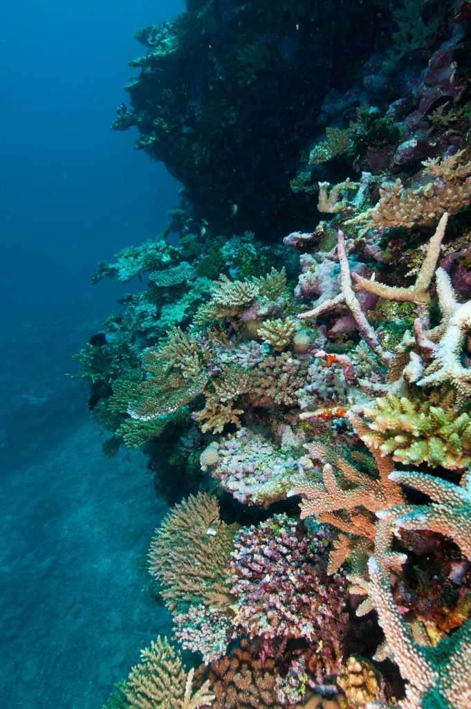 "Lizard Island, Day Reef. Image from ""The Great Barrier Reef: A Queensland Museum Discovery Guide""."