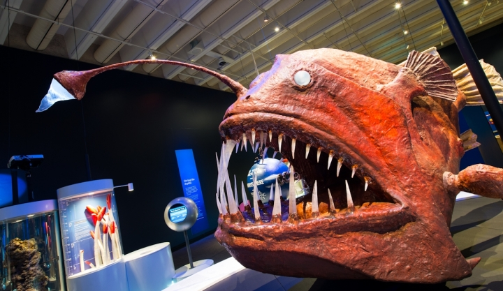 Don't worry this Anglerfish is just a replica