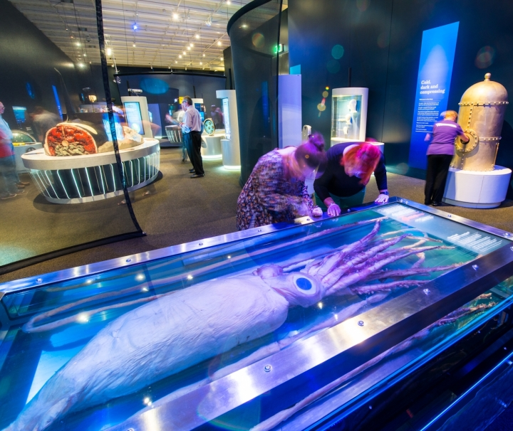Get up close to the Giant Squid