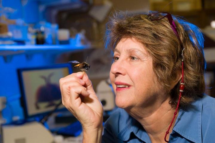 International Day of Women and Girls in Science - Christine Lambkin.jpg