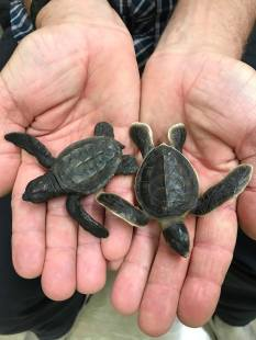 WTD Turtles