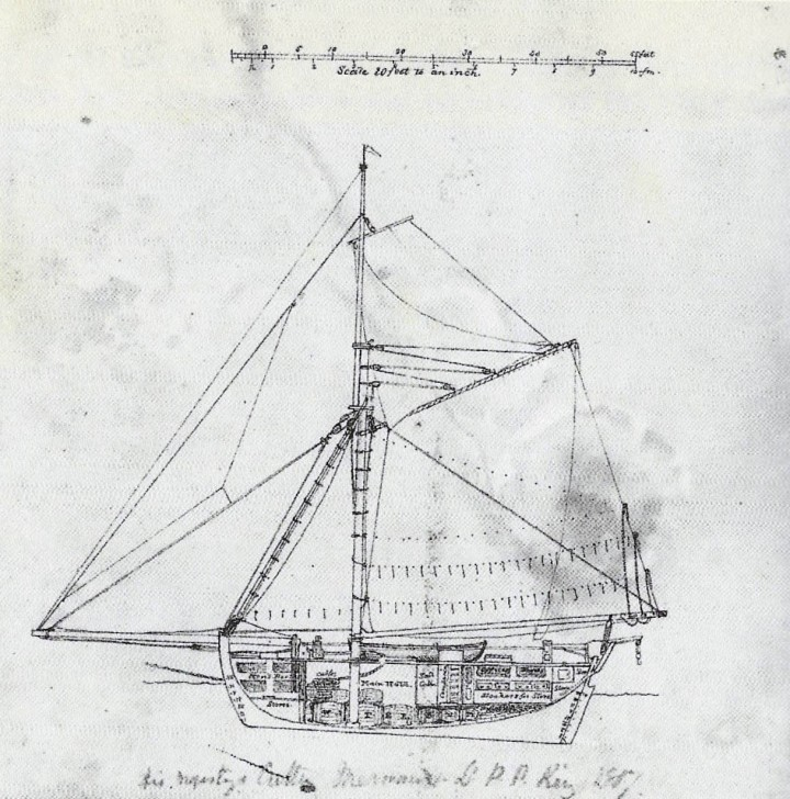 King's Sectional Drawing of the Mermaid