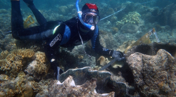 UPDATE ON MAGNETIC ISLAND'S GIANT CLAMS