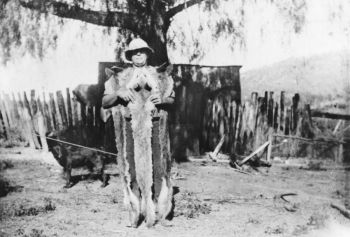Dingo hunter with pelts, Rockmountc1935
