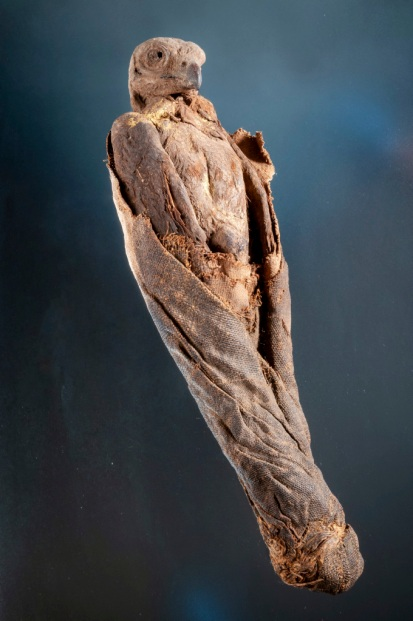 Mummified falcon, possibly Late Period (ca. 664–332 BCE) or Ptolemaic Period (ca. 332–30 BCE). Queensland Museum H23503 (Photo: Jeff Wright Dc1250)