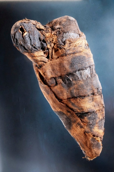 Mummified Egyptian Sacred Ibis (Threskiornis aethiopicus), possibly Roman Period (ca. 30 BCE – 395 CE). Queensland Museum H6451.1 (Photo C Jeff Wright Dc1272)