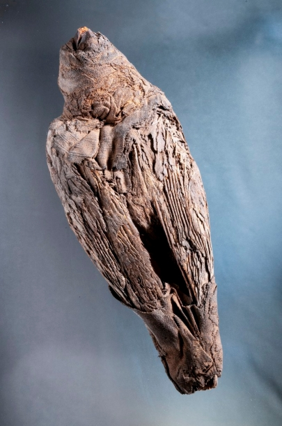 Hawk, Mummified