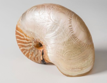 Nautilus shell (Nautilus macromphalus) carved with scene